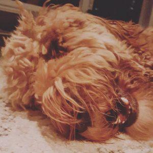Lazy Tucker!! Love this dog!